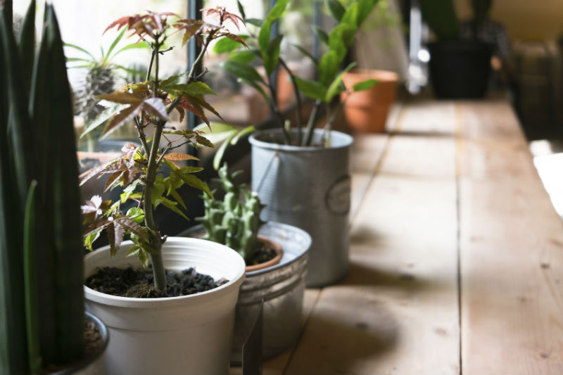 Houseplants and Their Effects on Air